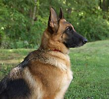 German Shepherd Profile by Sandy Keeton