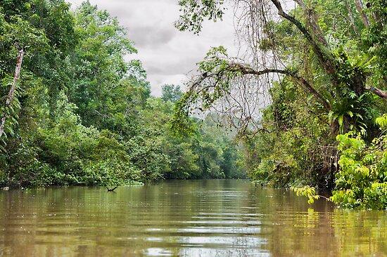 The View Downstream by Vickie Burt