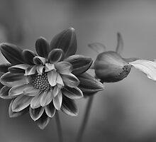 The last petal by Linda Cutche