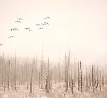 Fog and Dust by Gisele Bedard