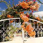 Bougainvillea & Gate by Francis Drake