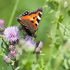 Butterfly by LaurentS