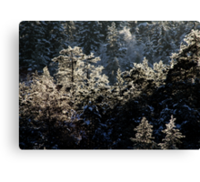 17.1.2013: Forest and Winter Day Canvas Print