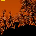 Photographer silhouette by TGasparovic