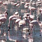 Flamingoes, Kenya by Martina Nicolls