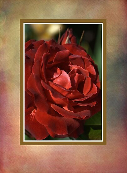 Elegant Rose by Joy Watson