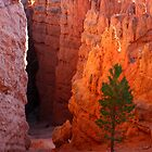 Bryce Canyon Path by Daniel Owens