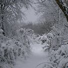 snowy pathway by brucemlong