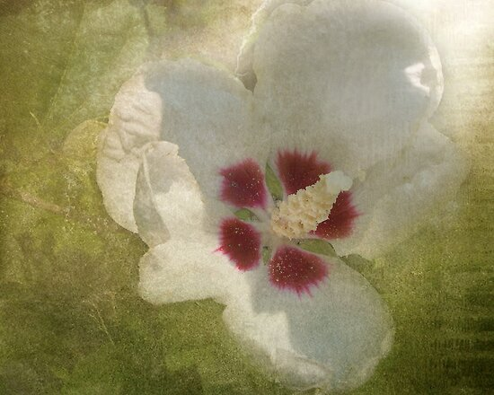 Petals In Shadows by Kathilee
