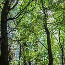 Light Through The Trees by MorganaPhoto