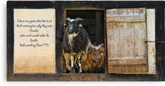 A Goat-tych... by © Kira Bodensted