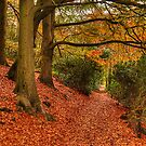 Autumn Walk by Pamsar