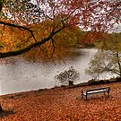 A Bench with a view by Pamsar