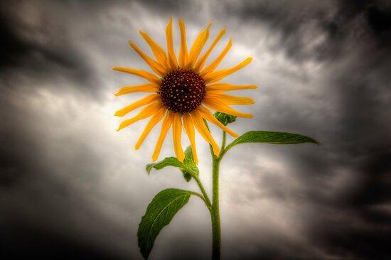 Sunshine and Rain by Bob Larson
