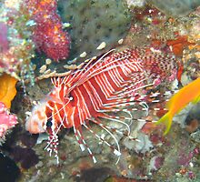 Lion fish  by simon17