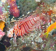 Lion fish  by simon17
