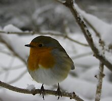 Robin in the Snow by James Taylor