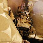 I Got Cat Class & I Got Cat Style by Ladymoose