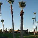 Fountain Hills, Arizona World Famous Fountain Avenue of the Fountains Palm Trees by ToGalaxy