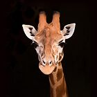 Giraffe iPhone by ImagesbyDi