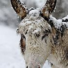 Donkey in the snow by Gary Richardson