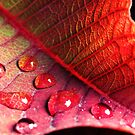 Drops on leaf by DavidCucalon