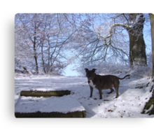 Dinefwr Castle the artist's dog in snow-01 Canvas Print