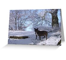 Dinefwr Castle the artist's dog in snow-01 Greeting Card