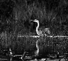 Black and White Fishing Expedition by Nazareth