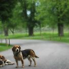 Lost Beagles by Bine