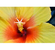 Golden Hibiscus Photographic Print