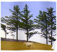 The Cow And The Lonesome Pines Poster