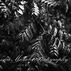Leaves after rain by JessicaMichele