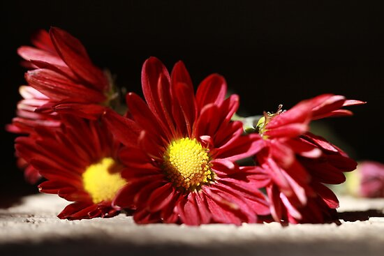 Flowers by JessicaMichele