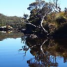 Small island in Dove Lake, Cradle mountain. Tasmania. by Esther's Art and Photography