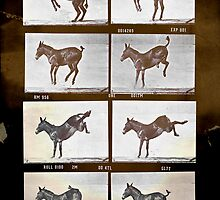 Muybridge Donkey by Miles Goscha