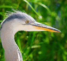 Heron 39 views by CPProPhoto