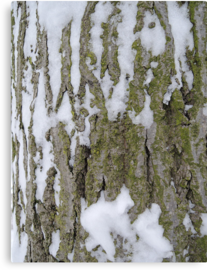 Snowy Bark by CreativeEm