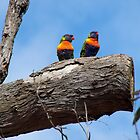 Rainbow Lorikeet by sandralee1989