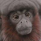 'Titi monkey' by Susan Hewson
