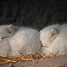 White fox by cherylc1