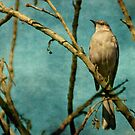 Mocking bird by zzsuzsa