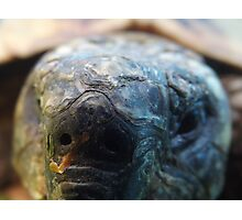 Close up tortoise Photographic Print