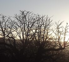 Tree at sunset by mollyspictures