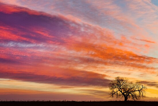 Lonesome Tree Sunrise by Bo Insogna