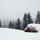 Lyle's Overlook at Royal Gorge in a Lake Tahoe Snowstorm by gerafotografija