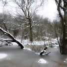 Brittons Pond in Snow by Lisa Williams