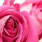 Vivid Pink Roses by Elizabeth Thomas