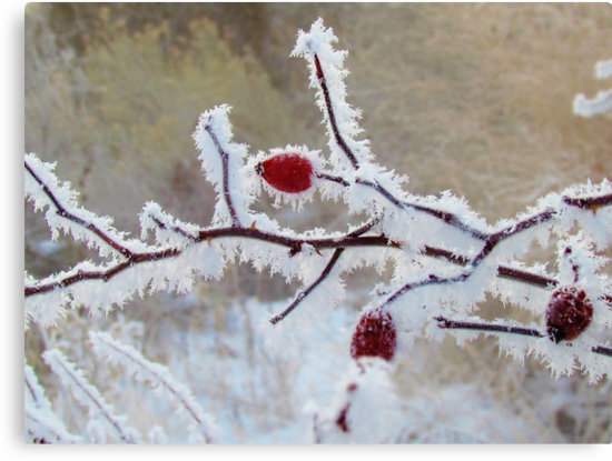 Frost Berry Red by Brenda Dahl