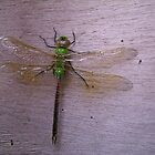 Green Dragonfly by osyran